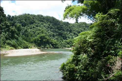 Fiji river and rain forrest